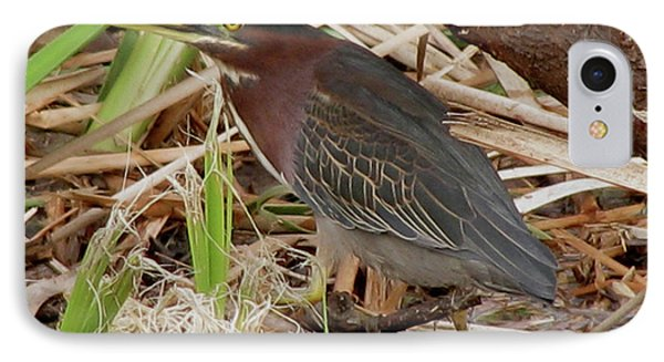 IPhone Case featuring the photograph Little Green Heron by Donna Brown