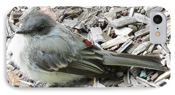 Little Junco Phone Case by Chrissey Dittus