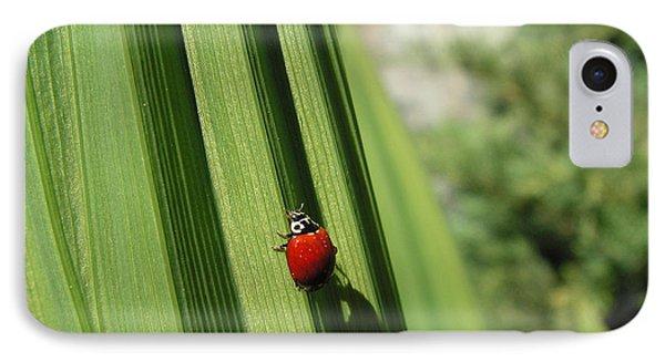 Ladybird IPhone Case by Cheryl Hoyle
