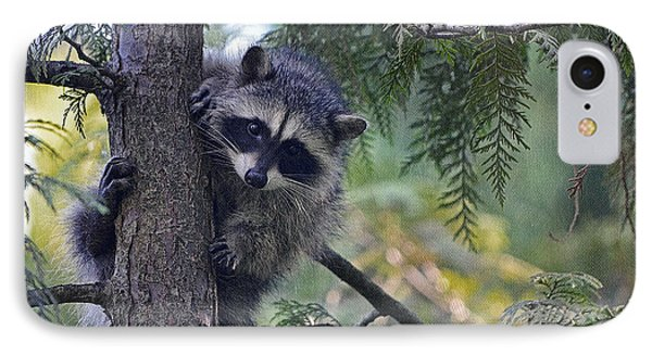 Little Raccoon IPhone Case by Maria Angelica Maira