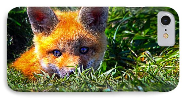 Little Red Fox IPhone Case by Bob Orsillo