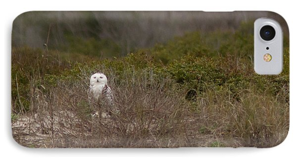 IPhone Case featuring the photograph Little Talbot Snowbird by Paul Rebmann