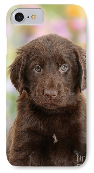 Liver Flat Coated Retriever Puppy IPhone Case by Mark Taylor