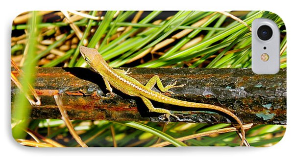 IPhone Case featuring the photograph Lizard by Cyril Maza