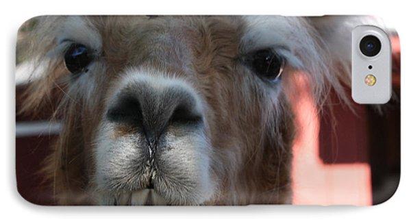 Llama After A Rough Night Phone Case by John Telfer