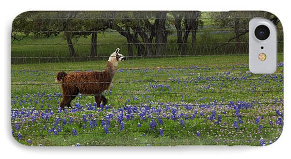 Llama In Bluebonnets IPhone Case by Susan Rovira