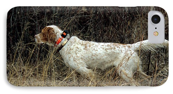 Llewellyn Setter IPhone Case by William H. Mullins