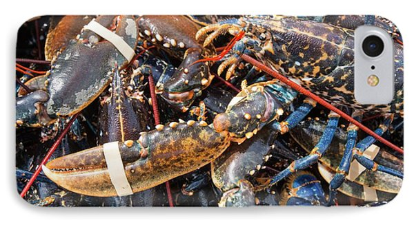 Lobsters Caught Off Craster IPhone Case