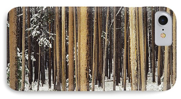 Lodgepole Pines And Snow Grand Teton IPhone Case by Panoramic Images