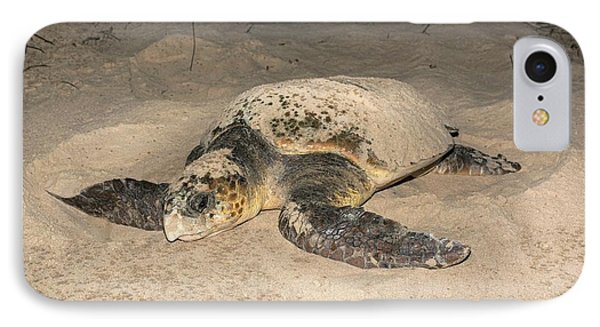 Loggerhead Turtle Covering Its Nest IPhone Case