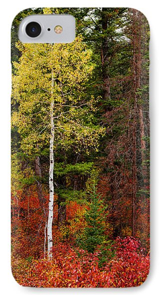 Lone Aspen In Fall IPhone Case by Chad Dutson