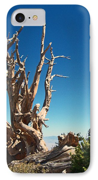 IPhone Case featuring the photograph Lone Bristlecone by Alan Socolik