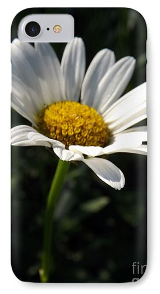 Lone Daisy IPhone Case