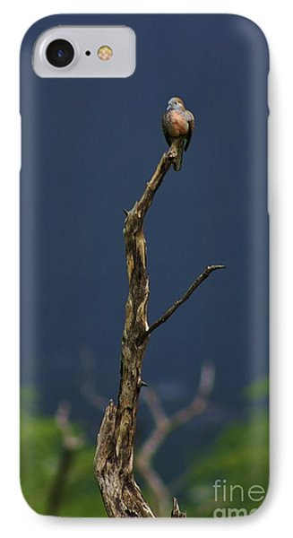 IPhone Case featuring the photograph Lone Dove by Craig Wood