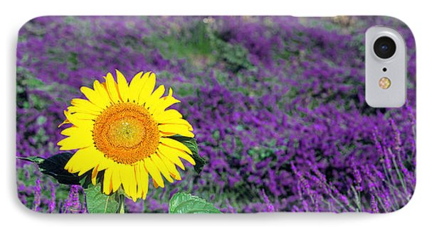 Lone Sunflower In Lavender Field France IPhone Case by Panoramic Images