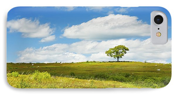 Lone Tree With Blue Sky In Blueberry Field Maine Photograph  IPhone Case by Keith Webber Jr