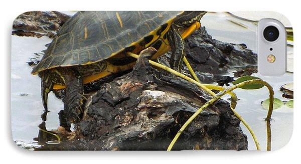 Lone Turtle IPhone Case by Audrey Van Tassell