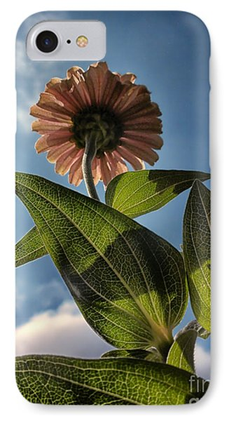 Lone Zinnia 01 Phone Case by Thomas Woolworth