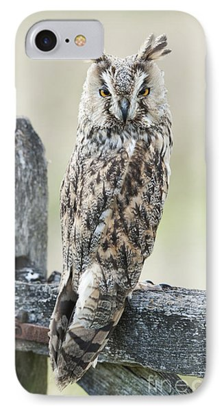 Long Eared Owl IPhone Case by Tim Gainey