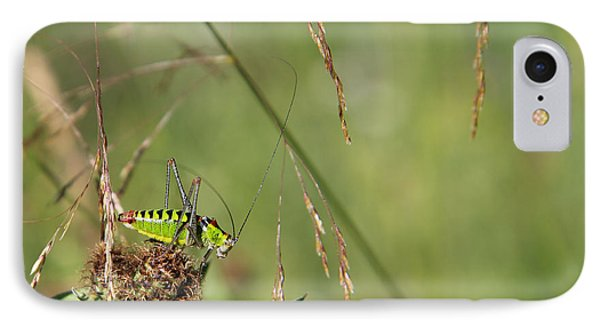 IPhone Case featuring the photograph Long-horned Katydid by Jivko Nakev