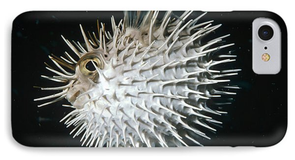 Long-spine Porcupinefish North America IPhone Case
