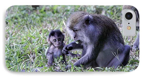 IPhone Case featuring the photograph Long Tailed Macaque Family by Shoal Hollingsworth