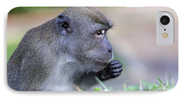 IPhone Case featuring the photograph Long Tailed Macaque Feeding by Shoal Hollingsworth