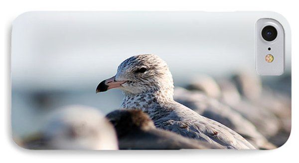 Looking Seagull IPhone Case by Marty Gayler