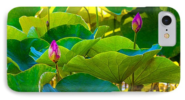 Lotus Garden IPhone Case by Roselynne Broussard
