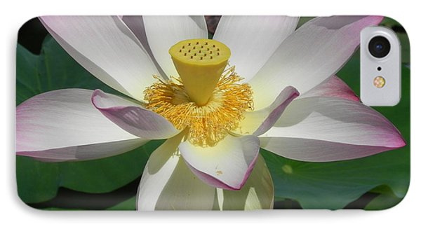 Lotus Flower IPhone Case by Chrisann Ellis