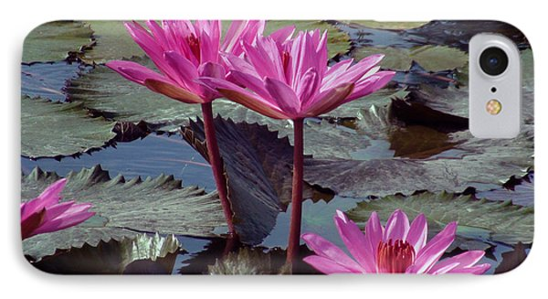 Lotus Flower IPhone Case by Sergey Lukashin