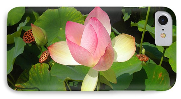 Lotus I IPhone Case by David Klaboe