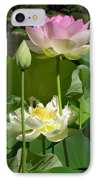 Lotus In Bloom IPhone Case by John Lautermilch