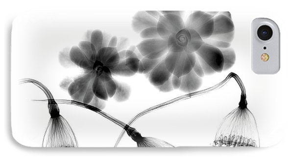 Lotus Seedheads And Houseleeks IPhone Case by Albert Koetsier X-ray
