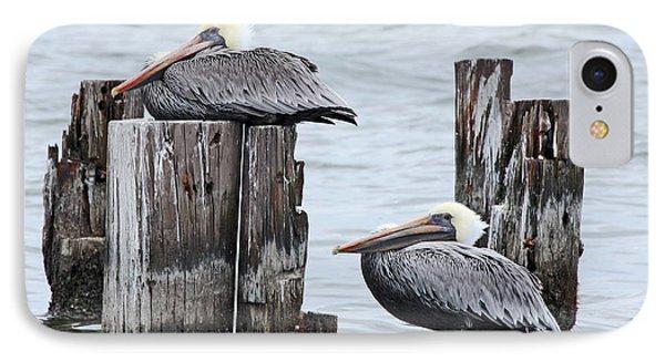 Louisiana Pelicans On Lake Ponchartrain IPhone Case by Luana K Perez
