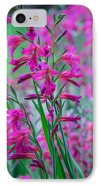 Louisiana Pink Iris Fulva IPhone Case by Ester  Rogers