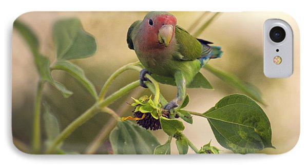 Lovebird On  Sunflower Branch  IPhone Case by Saija  Lehtonen