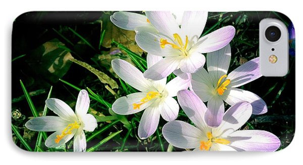 Lovely Flowers In Spring IPhone Case by Matthias Hauser