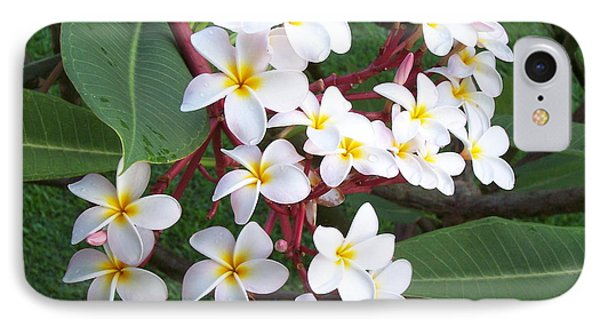 IPhone Case featuring the photograph Lovely by Sheila Byers