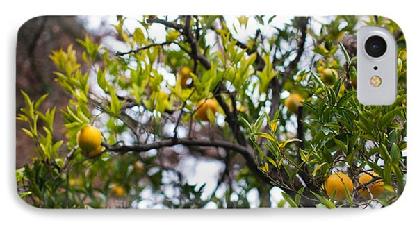 Low Angle View Of An Orange Tree IPhone Case by Panoramic Images