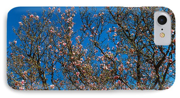 Low Angle View Of Cherry Trees IPhone Case
