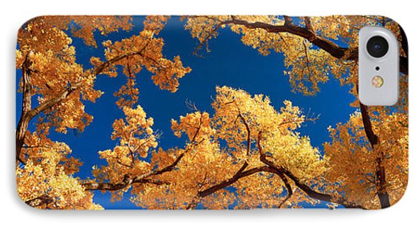 Low Angle View Of Cottonwood Tree IPhone Case by Panoramic Images