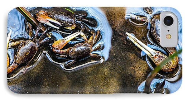 Low Tide Breakfast  IPhone Case by Mary Ward