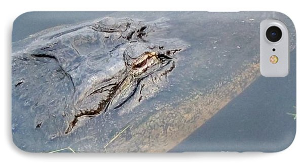Loxahatchee Gator IPhone Case by Kathryn Barry