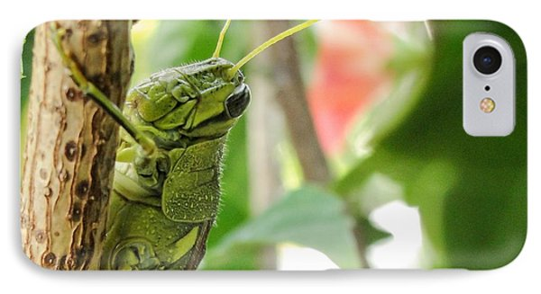 IPhone Case featuring the photograph Lubber Grasshopper by TK Goforth