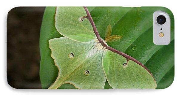 Luna Moth Phone Case by Alana Ranney