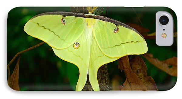 IPhone Case featuring the photograph Luna Moth by Kathy Baccari