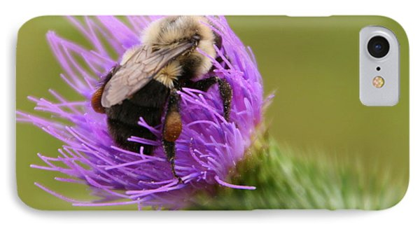 Lunching Atop A Thistle IPhone Case