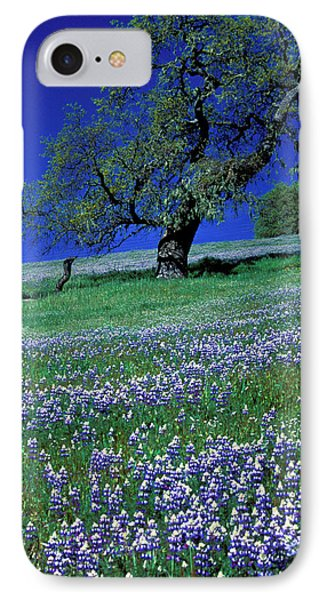 Lupine And The Leaning Tree Phone Case by Kathy Yates