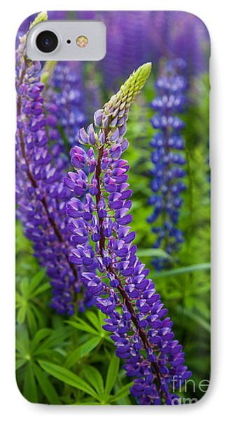 Lupine Curve IPhone Case by Susan Cole Kelly
